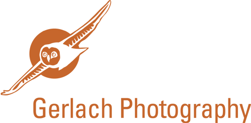 Focus on wildlife | Gerlach Photography